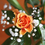 Orange Rose. Beautiful orange rose surrounded by green leaves and small white flowers with wooden background royalty free stock photos