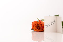 Orange Rose Besides Thank You Greeting Card Royalty Free Stock Images