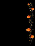 Orange rose border with black copy space Stock Images