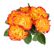 Orange rose bouquet Stock Image
