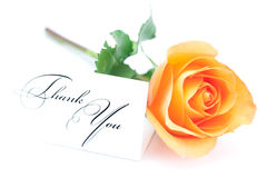 Orange rose and a card with the words thank you Stock Images