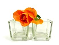 Orange rose. A orange rose on a cube from glas royalty free stock photo