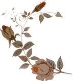 Orange rose curl Stock Images