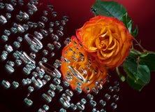 Orange rose and drops Stock Photo