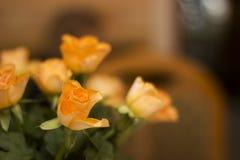 Orange rose Royalty Free Stock Photos