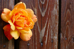 Orange Rose Flower On Wooden Background Stock Photography