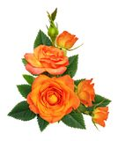 Orange rose flowers in a corner floral arrangement royalty free stock photography