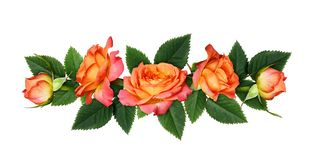 Orange rose flowers in a line arrangement royalty free stock photos