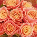 Orange rose flowers top view natural background. Orange rose flowers top view closeup, colorful natural background royalty free stock image