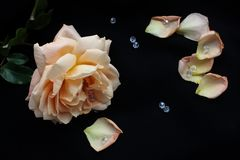 Orange rose framed with crystals and petals Royalty Free Stock Photography