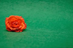 An orange rose. On a green background royalty free stock image