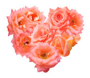 Orange rose isolated in heart shape Stock Image