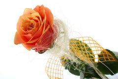 Orange rose isolated on white stock photography