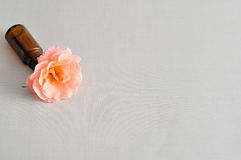 Orange rose isolated on a white background. An orange rose isolated on a white background royalty free stock image