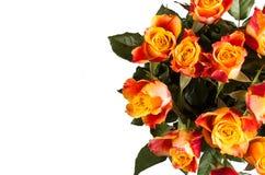 Orange rose isolated on white. Beautiful flower stock photography