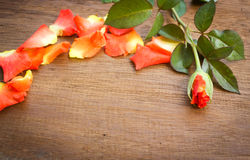 Orange rose on a old wood board. Royalty Free Stock Images