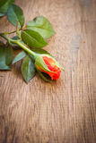 Orange rose on a old wood board. Royalty Free Stock Photography