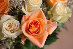 Orange Rose Royalty Free Stock Photos