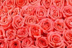 Orange rose pattern Stock Image
