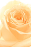 Orange rose petals Royalty Free Stock Photos