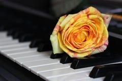 Orange rose on piano so close. One flower royalty free stock photo