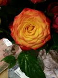 An Orange Rose Stock Images