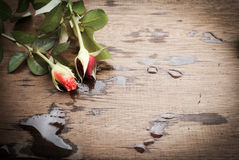 Orange rose and red rose on a old wood board. Stock Photo