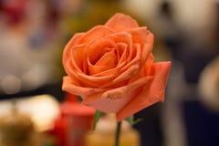 Orange rose. In the restaurant stock image