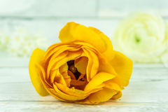Orange rose. On a rustic wooden table stock photography