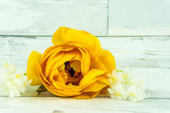 Orange rose. On a rustic wooden table royalty free stock image