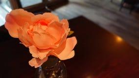 Orange Rose. Single orange rose on a soft lit background royalty free stock image