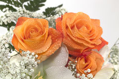 Orange Rose. For typical bouquet use royalty free stock images
