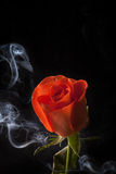 Orange rose. An orange rose with water droplets on black background with smoke Stock Images