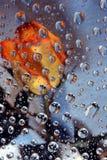 Orange rose in water drops 1 Stock Photos