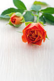 Orange rose on white wooden background Stock Photography