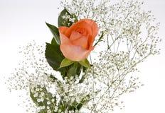 Free Orange Rose With Baby S Breath Stock Photos - 7226753