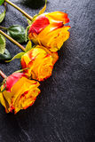 Orange rose. Yellow rose. Several orange roses on Granite background Royalty Free Stock Photo