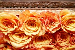 Orange Rosen 035 stockfotos