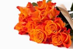 Orange Rosen Lizenzfreies Stockfoto