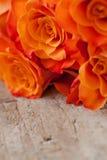 Orange Rosen Lizenzfreie Stockfotografie