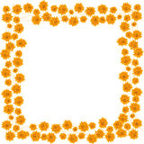 Orange roses. Border for your design Royalty Free Stock Photography