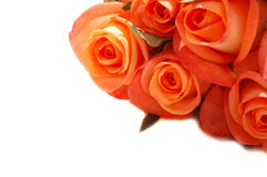 Orange roses. A bunch of orange roses royalty free stock photo