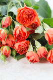 Orange roses Stock Image