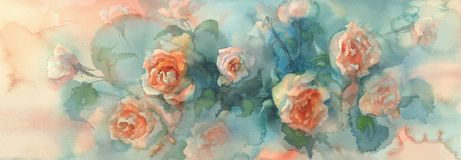 Orange roses colorful background watercolor Royalty Free Stock Image