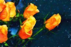 Orange Roses Fine Art. Fine Art - Flowers - Orange roses on dark canvas Royalty Free Stock Photography
