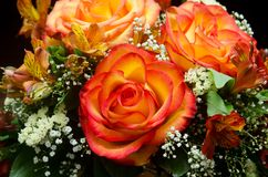 Orange roses flower bouquet Stock Photography