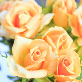 Orange roses in foreground , square format Stock Images