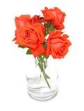 Orange roses in a glass vase Stock Image