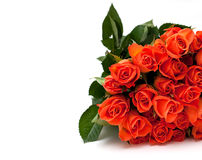 Orange roses isolated on white Royalty Free Stock Photos