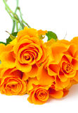 Orange roses over white Royalty Free Stock Image